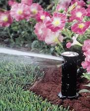 http://www.arborlawninc.com/images/bed%20irrigation1.jpg